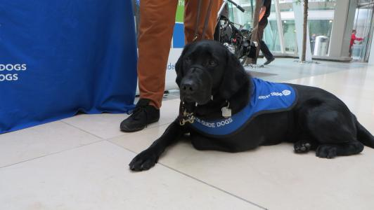 June.2.2015 Alberta Guide Dog 16